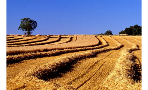 Colloque Agriculture de conservation des Sols : 16 septembre 2016 à Toulouse