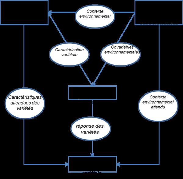 Programme du groupe innovations variétales